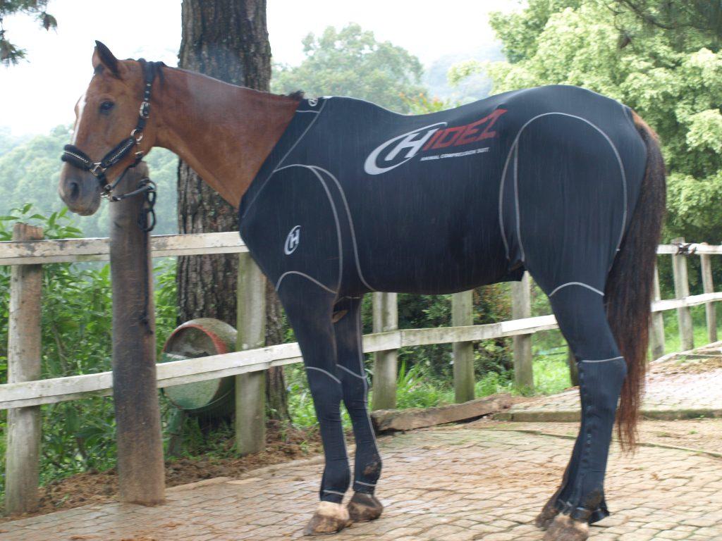Cavalo Passieur envelopado